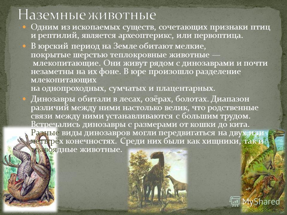 Одним из ископаемых существ, сочетающих признаки птиц и рептилий, является археоптерикс, или первоптица. В юрский период на Земле обитают мелкие, покрытые шерстью теплокровные животные млекопитающие. Они живут рядом с динозаврами и почти незаметны на