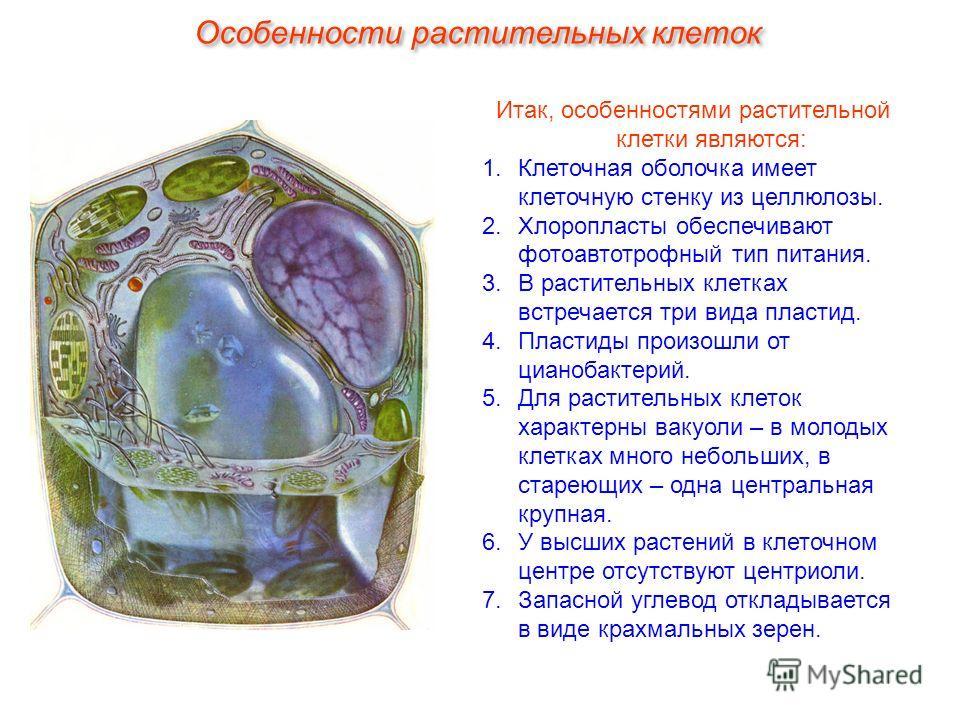 Итак, особенностями растительной клетки являются: 1.Клеточная оболочка имеет клеточную стенку из целлюлозы. 2.Хлоропласты обеспечивают фотоавтотрофный тип питания. 3.В растительных клетках встречается три вида пластид. 4.Пластиды произошли от цианоба