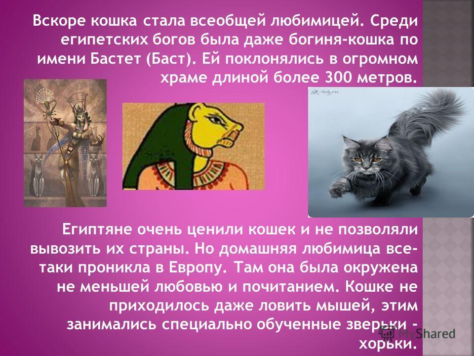 Вскоре кошка стала всеобщей любимицей. Среди египетских богов была даже богиня-кошка по имени Бастет (Баст). Ей поклонялись в огромном храме длиной более 300 метров. Египтяне очень ценили кошек и не позволяли вывозить их страны. Но домашняя любимица