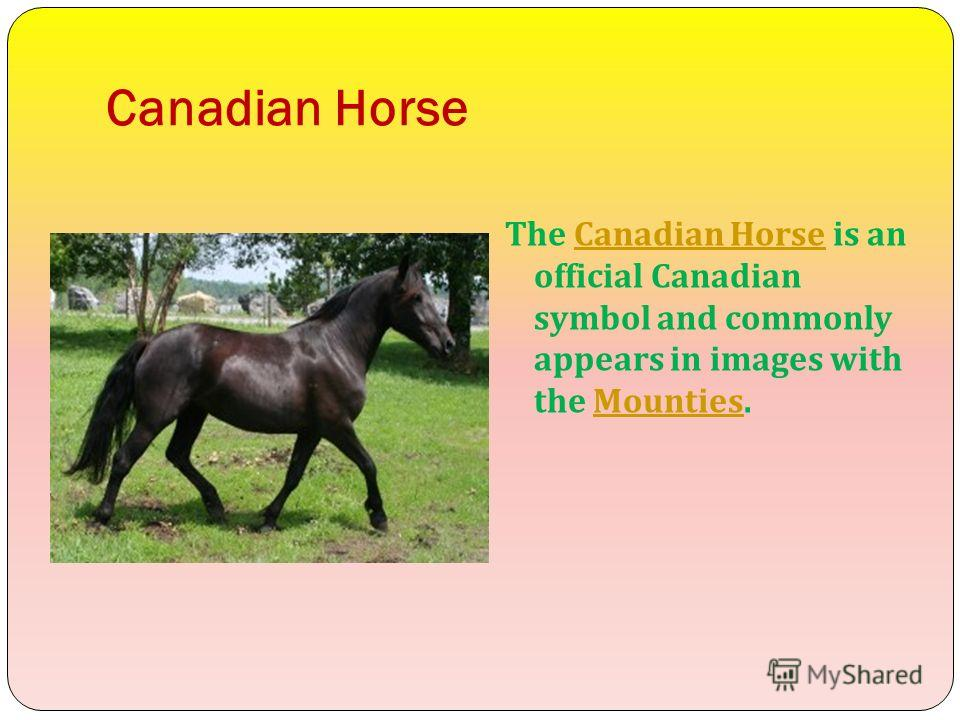 Canadian Horse The Canadian Horse is an official Canadian symbol and commonly appears in images with the Mounties.Canadian HorseMounties