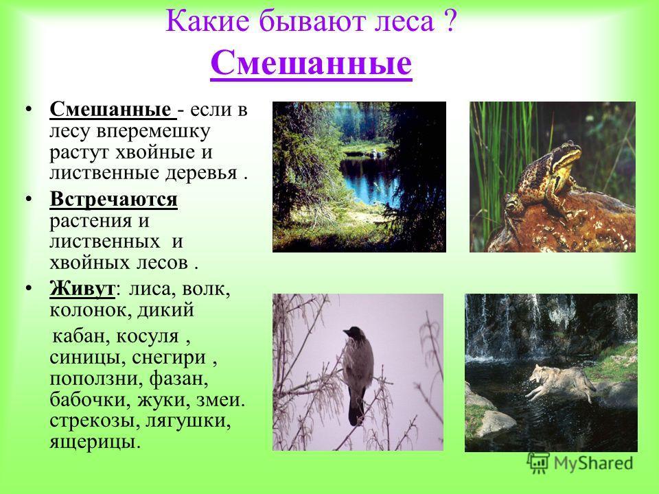 Какие бывают леса ? Смешанные Смешанные - если в лесу вперемешку растут хвойные и лиственные деревья. Встречаются растения и лиственных и хвойных лесов. Живут: лиса, волк, колонок, дикий кабан, косуля, синицы, снегири, поползни, фазан, бабочки, жуки,