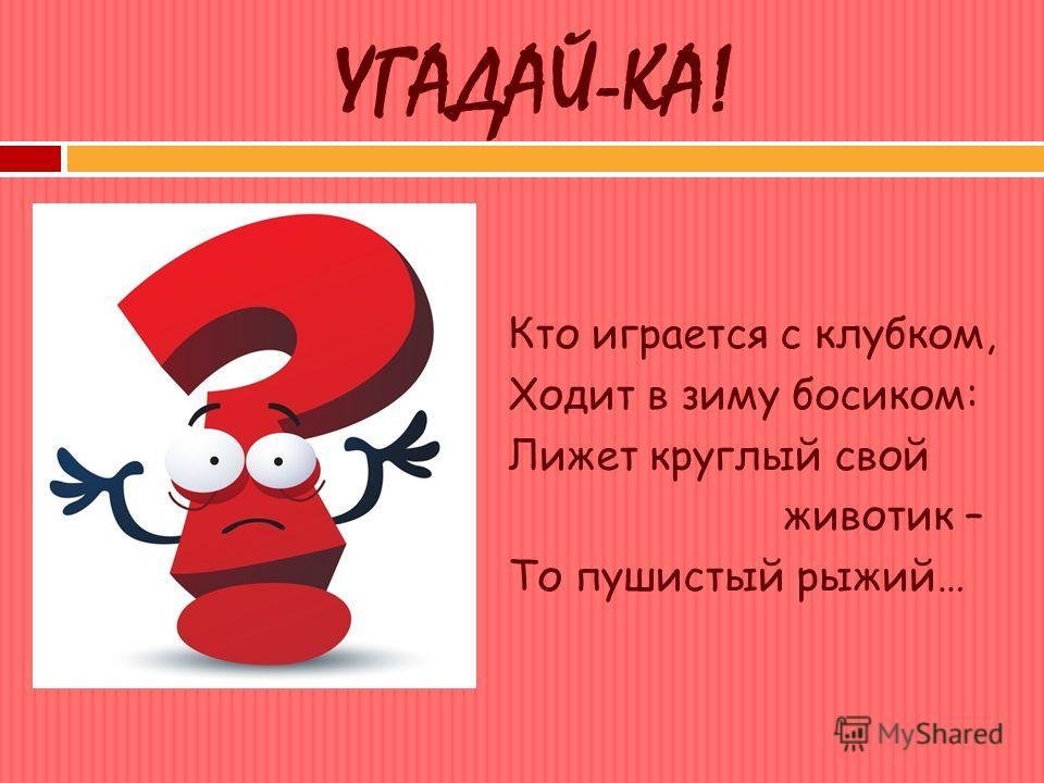 УГАДАЙ-КА! Кто играется с клубком, Ходит в зиму босиком: Лижет круглый свой животик – То пушистый рыжий…
