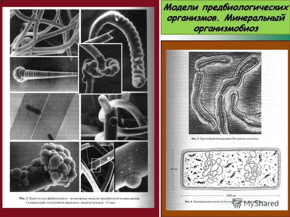 Модели предбиологических организмов. Минеральный организмобиоз