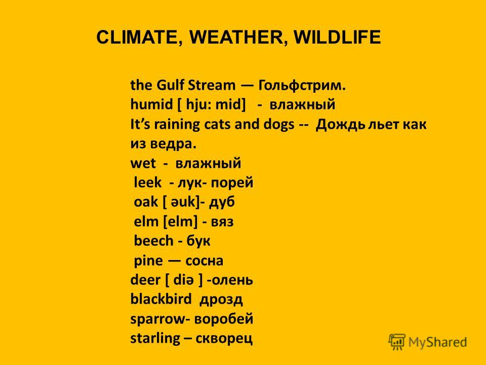 CLIMATE, WEATHER, WILDLIFE the Gulf Stream Гольфстрим. humid [ hju: mid] - влажный Its raining cats and dogs -- Дождь льет как из ведра. wet - влажный leek - лук- порей oak [ әuk]- дуб elm [elm] - вяз beech - бук pine сосна deer [ diә ] -олень blackb