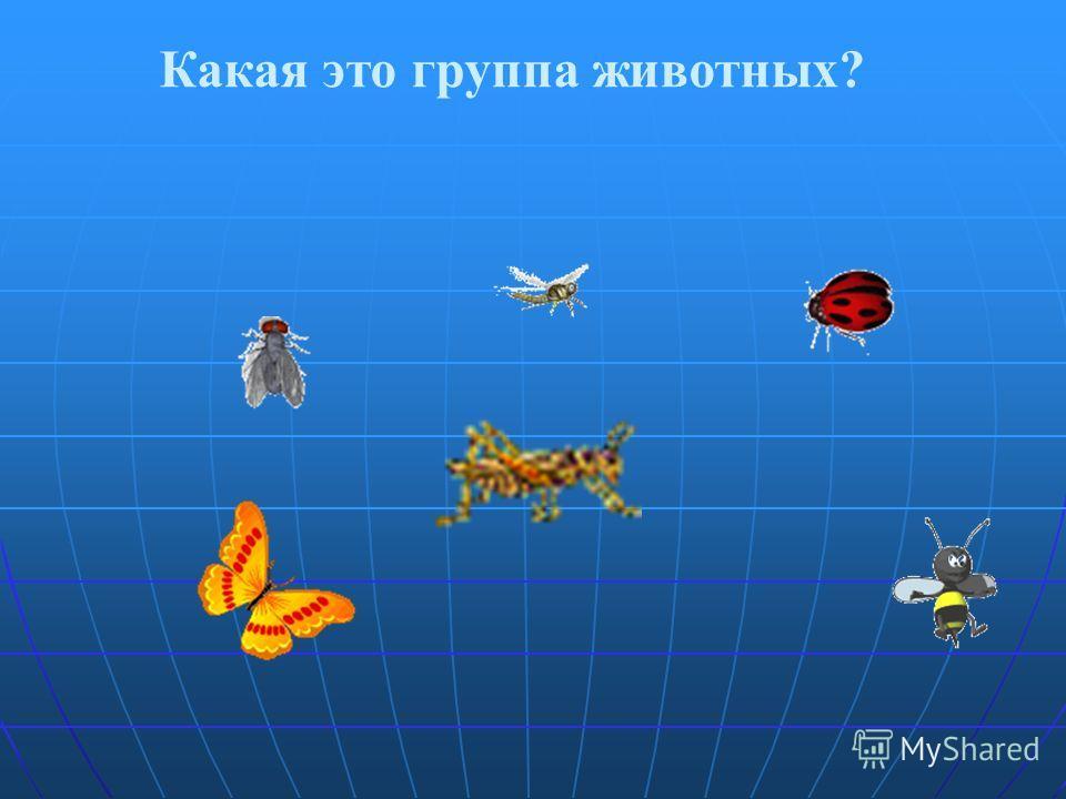Какая это группа животных?