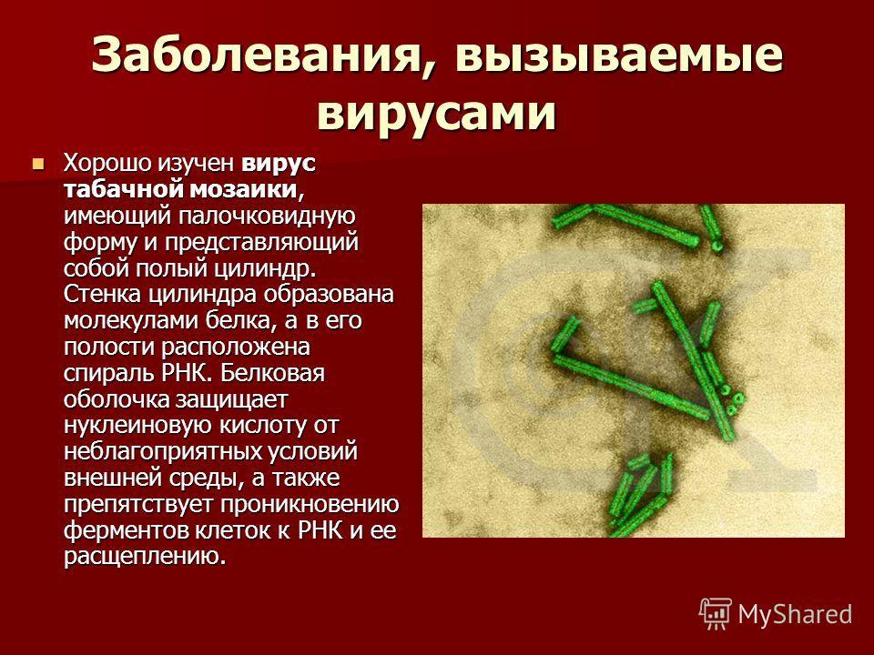 Заболевания, вызываемые вирусами Хорошо изучен вирус табачной мозаики, имеющий палочковидную форму и представляющий собой полый цилиндр. Стенка цилиндра образована молекулами белка, а в его полости расположена спираль РНК. Белковая оболочка защищает