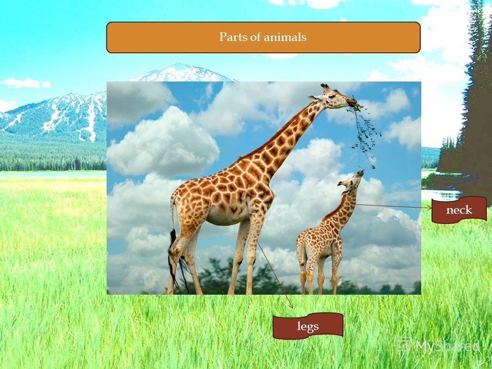 Parts of animals legs neck