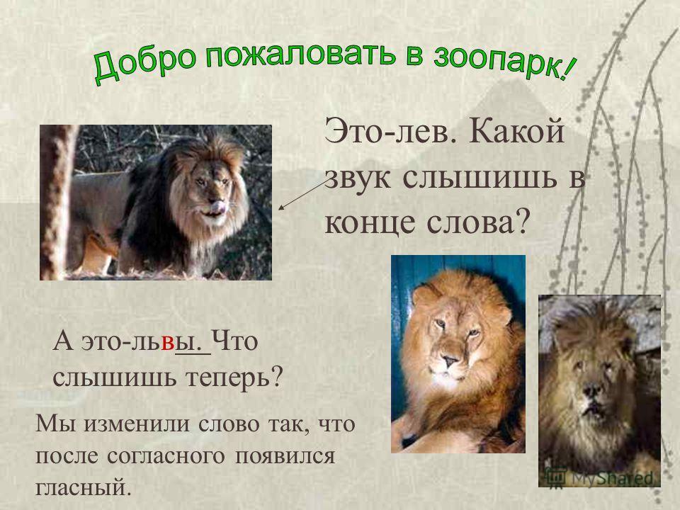 Это-лев. Какой звук слышишь в конце слова? А это-львы. Что слышишь теперь? Мы изменили слово так, что после согласного появился гласный.