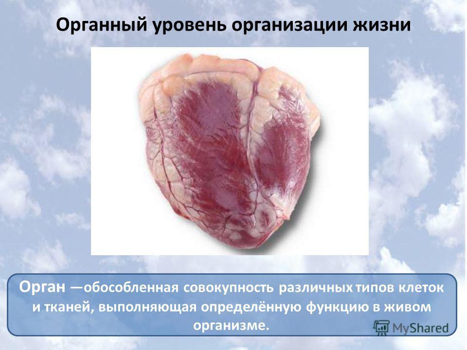 Органный уровень организации жизни Орган обособленная совокупность различных типов клеток и тканей, выполняющая определённую функцию в живом организме.