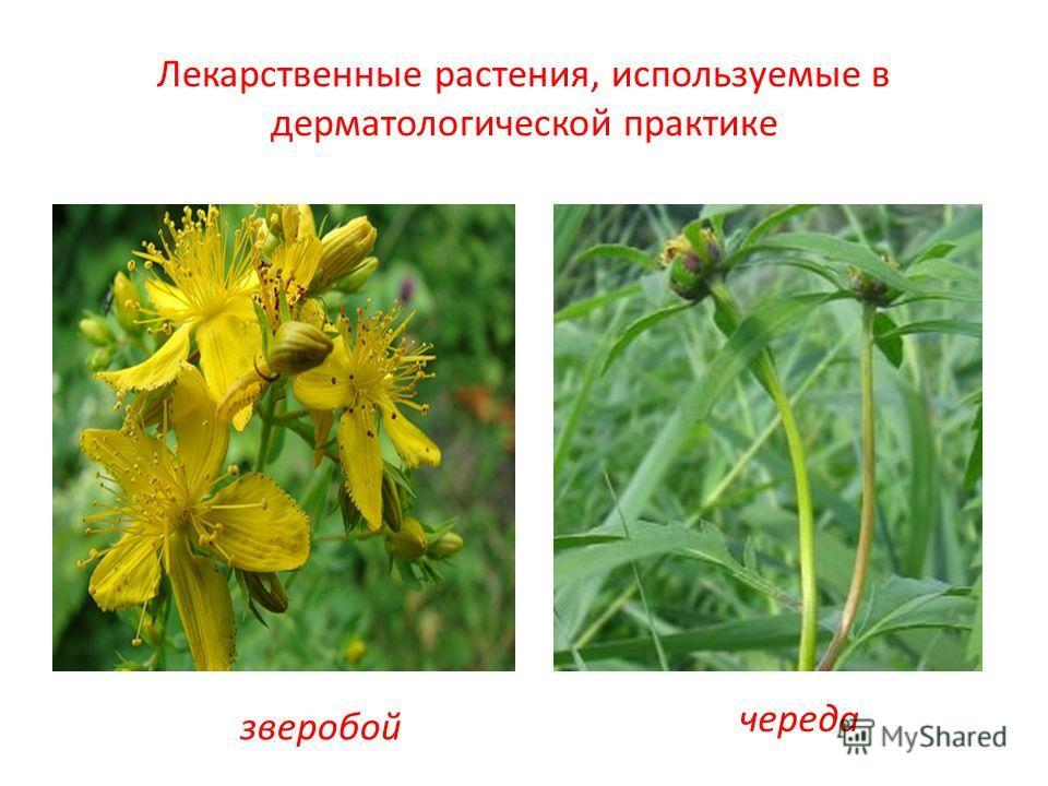 Лекарственные растения, используемые в дерматологической практике зверобой череда