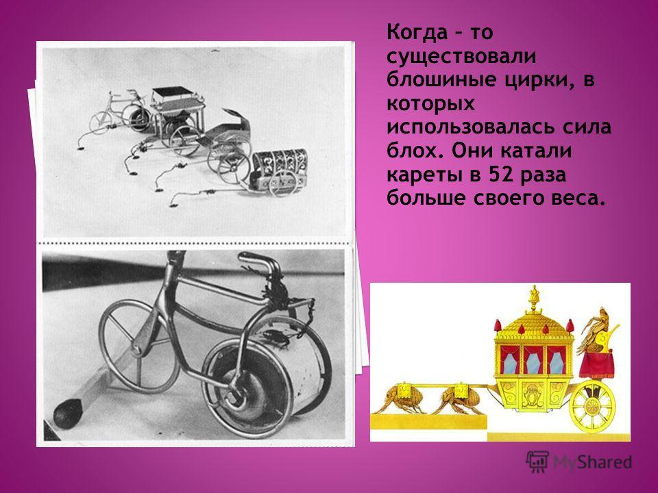 Когда – то существовали блошиные цирки, в которых использовалась сила блох. Они катали кареты в 52 раза больше своего веса.