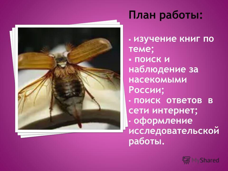 План работы: изучение книг по теме; поиск и наблюдение за насекомыми России; поиск ответов в сети интернет; оформление исследовательской работы.