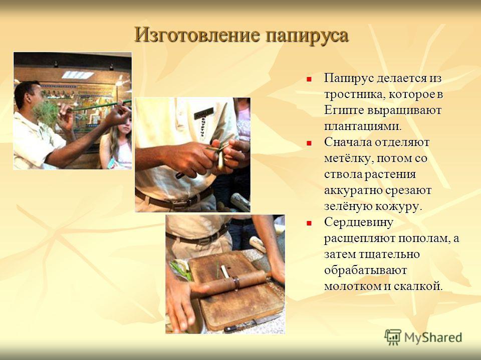Изготовление папируса Папирус делается из тростника, которое в Египте выращивают плантациями. Папирус делается из тростника, которое в Египте выращивают плантациями. Сначала отделяют метёлку, потом со ствола растения аккуратно срезают зелёную кожуру.