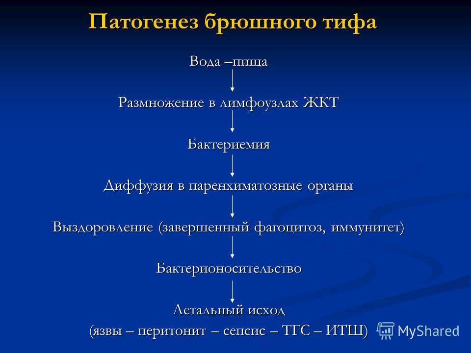 Патогенез брюшного тифа Вода –пища Размножение в лимфоузлах ЖКТ Бактериемия Диффузия в паренхиматозные органы Выздоровление (завершенный фагоцитоз, иммунитет) Бактерионосительство Летальный исход (язвы – перитонит – сепсис – ТГС – ИТШ)