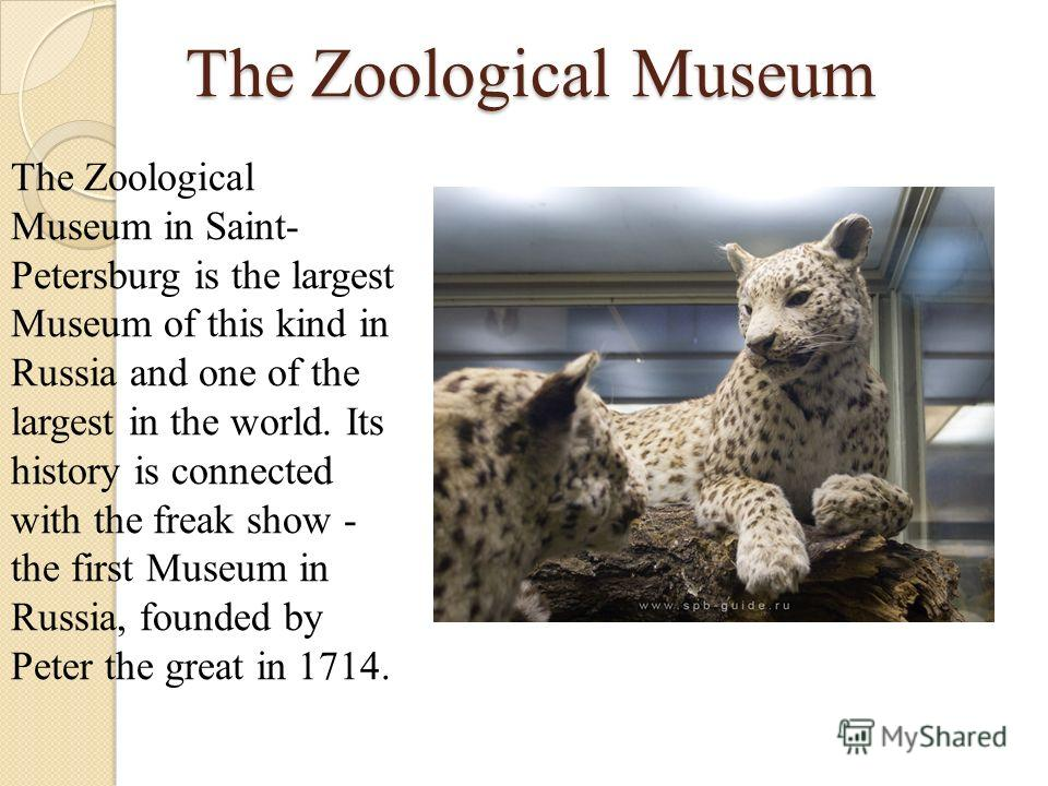 The Zoological Museum The Zoological Museum in Saint- Petersburg is the largest Museum of this kind in Russia and one of the largest in the world. Its history is connected with the freak show - the first Museum in Russia, founded by Peter the great i