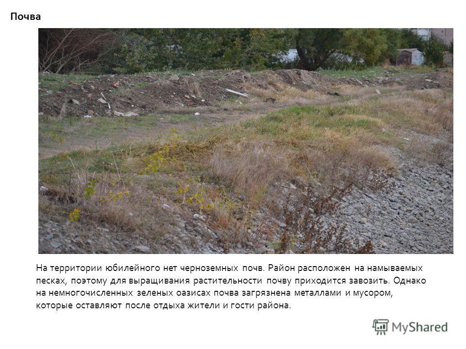 Почва На территории юбилейного нет черноземных почв. Район расположен на намываемых песках, поэтому для выращивания растительности почву приходится завозить. Однако на немногочисленных зеленых оазисах почва загрязнена металлами и мусором, которые ост