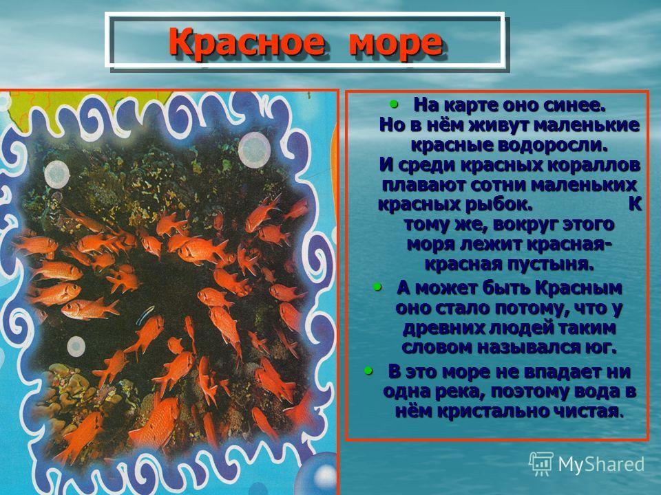 Красное море Красное море На карте оно синее. Но в нём живут маленькие красные водоросли. И среди красных кораллов плавают сотни маленьких красных рыбок. К тому же, вокруг этого моря лежит красная- красная пустыня. На карте оно синее. Но в нём живут