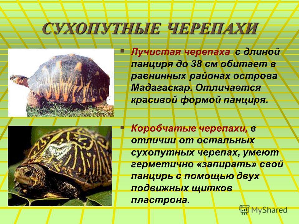 СУХОПУТНЫЕ ЧЕРЕПАХИ Лучистая черепаха с длиной панциря до 38 см обитает в равнинных районах острова Мадагаскар. Отличается красивой формой панциря. Коробчатые черепахи, в отличии от остальных сухопутных черепах, умеют герметично «запирать» свой панци
