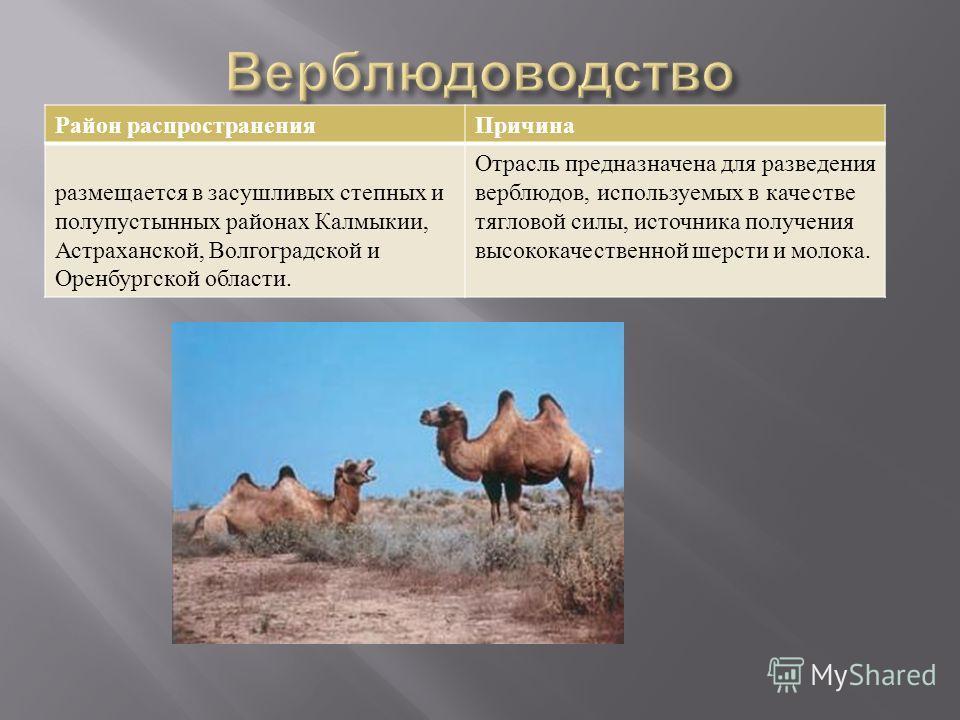 Район распространения Причина размещается в засушливых степных и полупустынных районах Калмыкии, Астраханской, Волгоградской и Оренбургской области. Отрасль предназначена для разведения верблюдов, используемых в качестве тягловой силы, источника полу