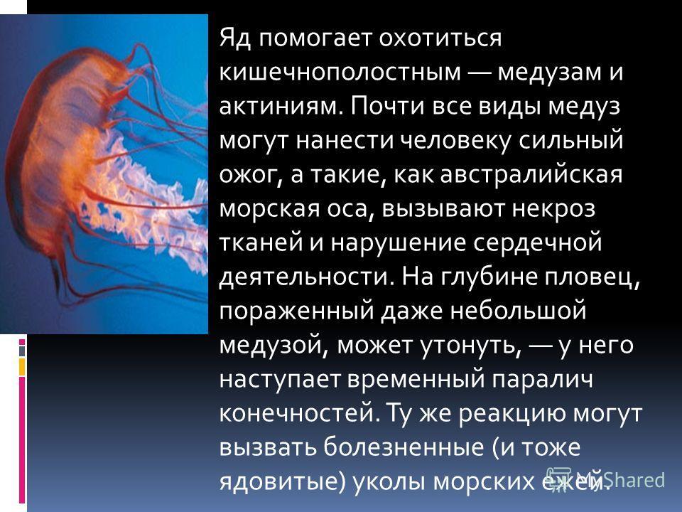 Яд помогает охотиться кишечнополостным медузам и актиниям. Почти все виды медуз могут нанести человеку сильный ожог, а такие, как австралийская морская оса, вызывают некроз тканей и нарушение сердечной деятельности. На глубине пловец, пораженный даже