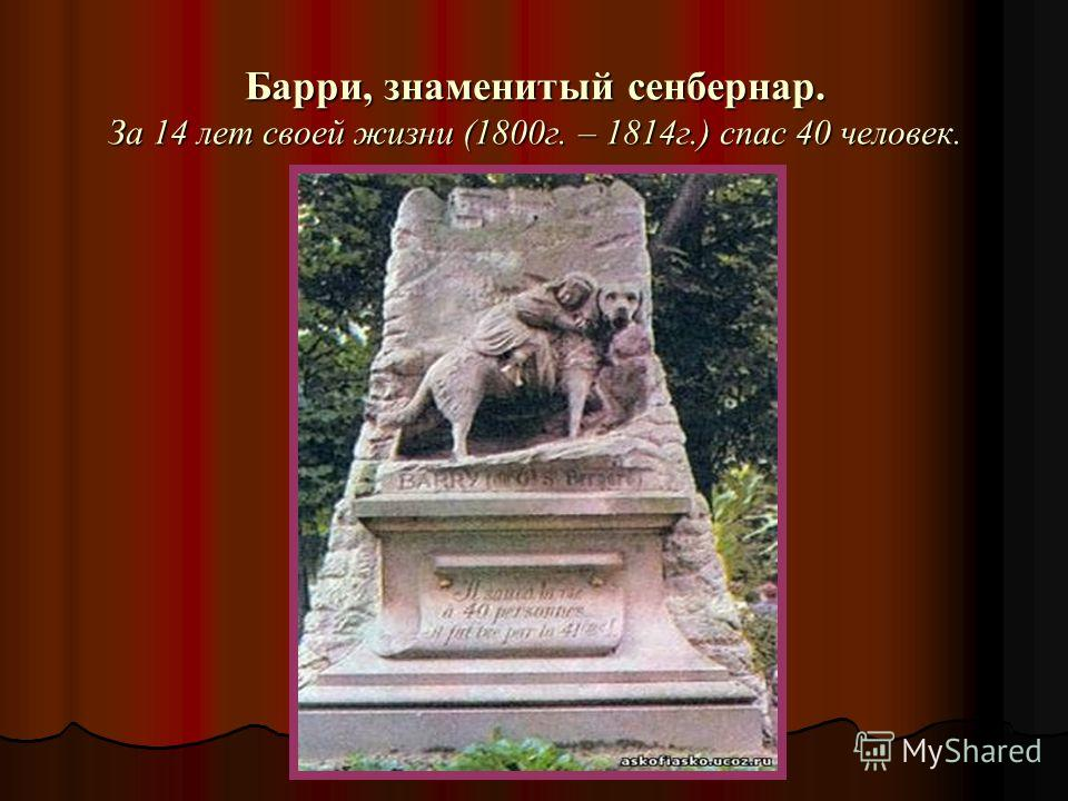Барри, знаменитый сенбернар. За 14 лет своей жизни (1800г. – 1814г.) спас 40 человек.
