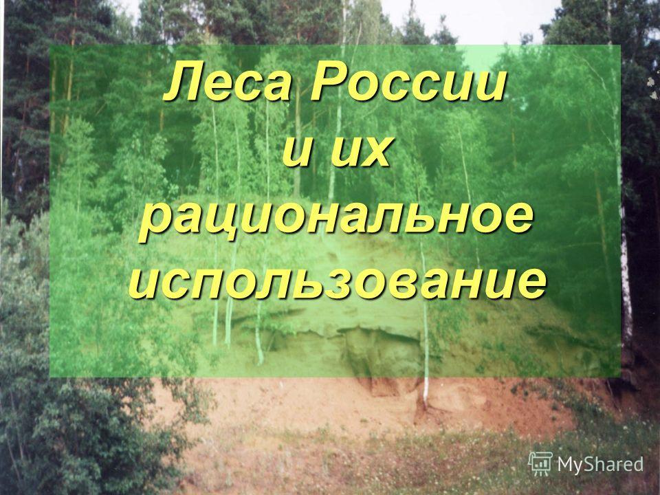 Леса России и их рациональное использование