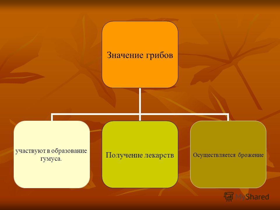 Значение грибов участвуют в образование гумуса. Получение лекарств Осуществляется брожение