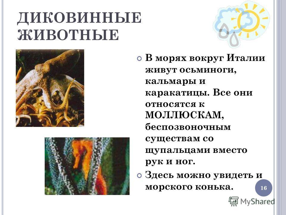 16 ДИКОВИННЫЕ ЖИВОТНЫЕ В морях вокруг Италии живут осьминоги, кальмары и каракатицы. Все они относятся к МОЛЛЮСКАМ, беспозвоночным существам со щупальцами вместо рук и ног. Здесь можно увидеть и морского конька.