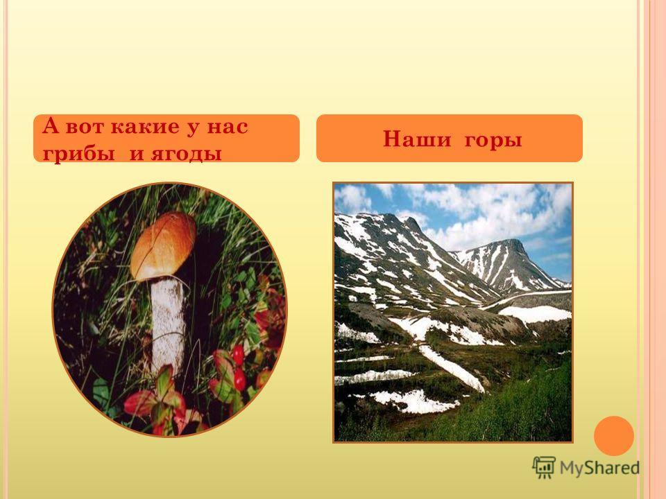 А вот какие у нас грибы и ягоды Наши горы