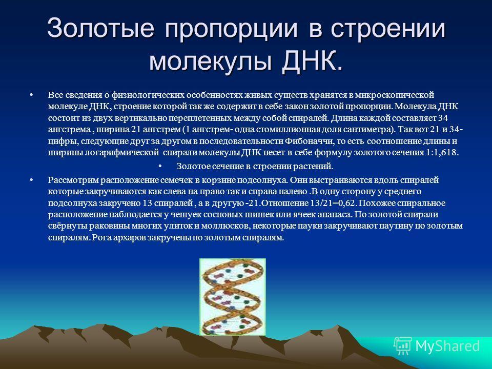 Золотые пропорции в строении молекулы ДНК. Все сведения о физиологических особенностях живых существ хранятся в микроскопической молекуле ДНК, строение которой так же содержит в себе закон золотой пропорции. Молекула ДНК состоит из двух вертикально п