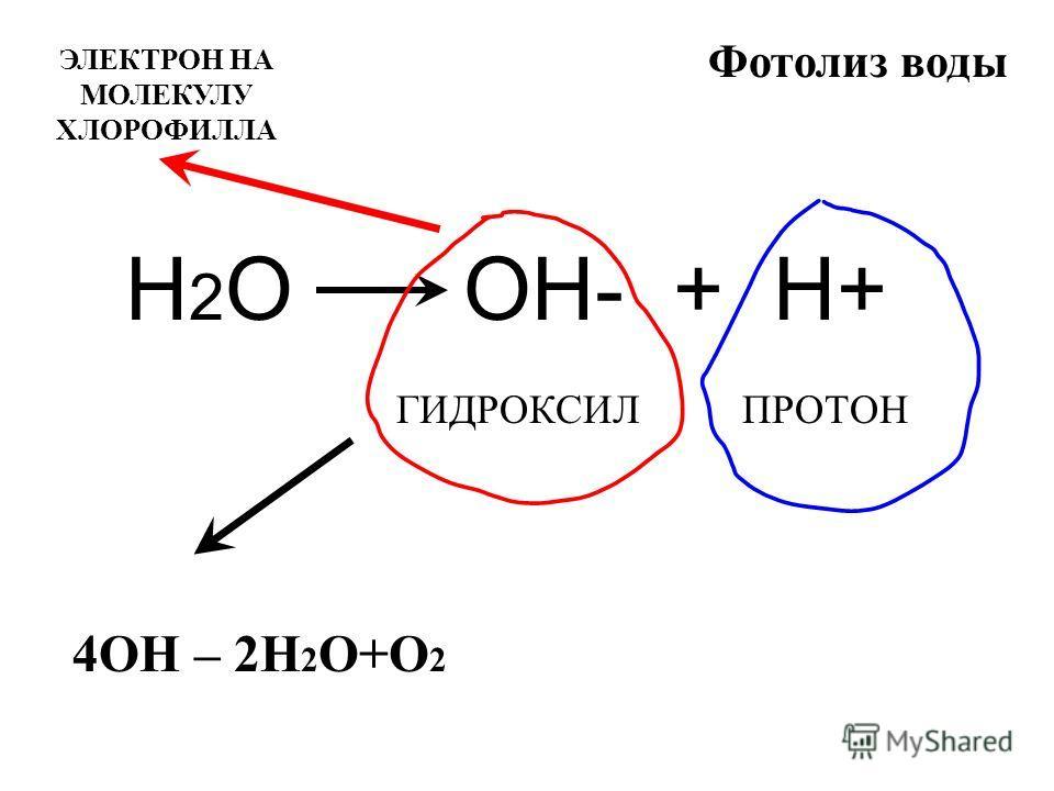 Фотолиз воды Н 2 О ОН- + Н+ ГИДРОКСИЛПРОТОН 4ОН – 2Н 2 О+О 2 ЭЛЕКТРОН НА МОЛЕКУЛУ ХЛОРОФИЛЛА