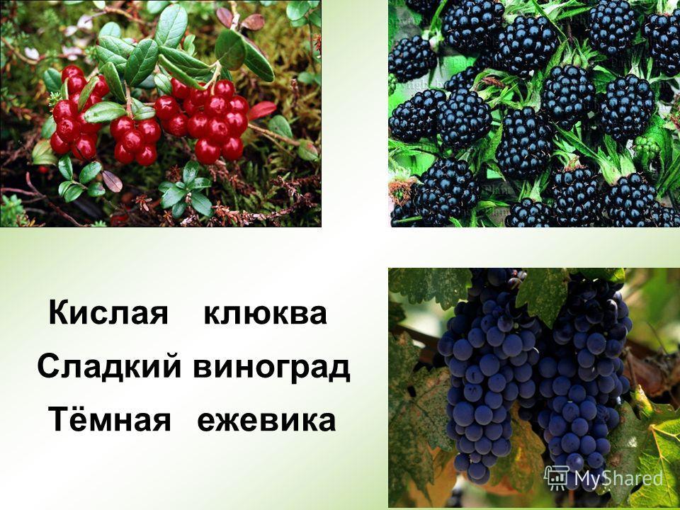 5 Тёмная Кислая Сладкий клюква виноград ежевика