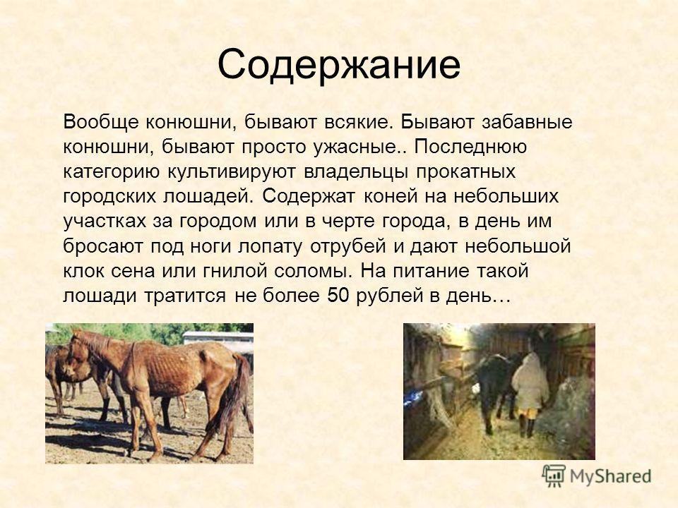 Содержание Вообще конюшни, бывают всякие. Бывают забавные конюшни, бывают просто ужасные.. Последнюю категорию культивируют владельцы прокатных городских лошадей. Содержат коней на небольших участках за городом или в черте города, в день им бросают п