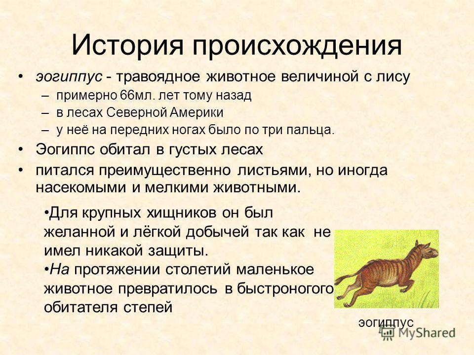 История происхождения эогиппус - травоядное животное величиной с лису –примерно 66мл. лет тому назад –в лесах Северной Америки –у неё на передних ногах было по три пальца. Эогиппс обитал в густых лесах питался преимущественно листьями, но иногда насе