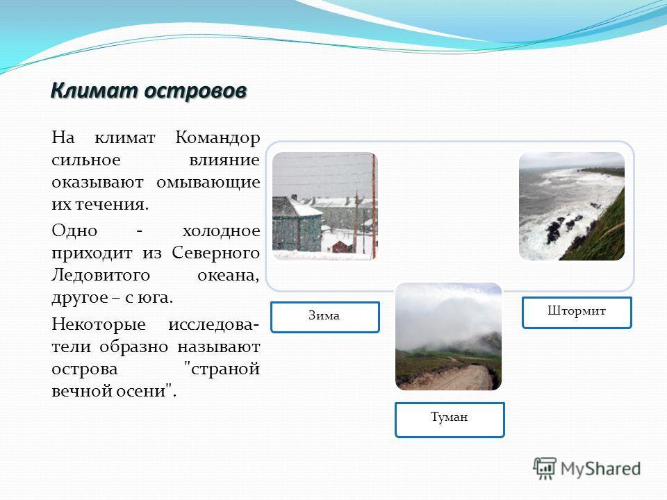 Климат островов На климат Командор сильное влияние оказывают омывающие их течения. Одно - холодное приходит из Северного Ледовитого океана, другое – с юга. Некоторые исследова- тели образно называют острова страной вечной осени.