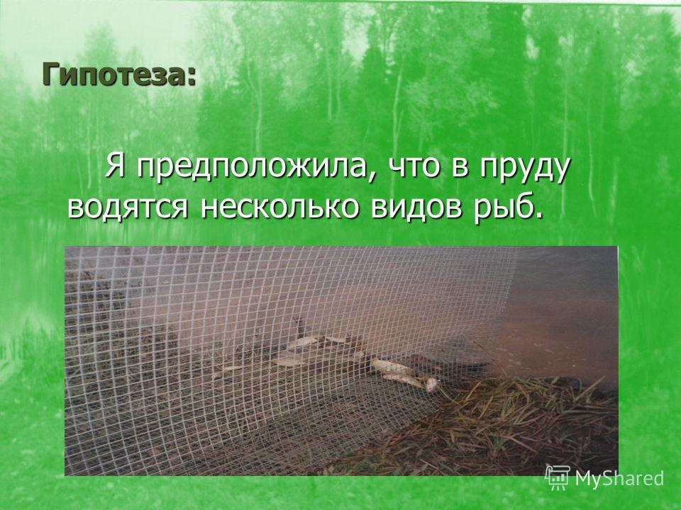 Гипотеза: Я предположила, что в пруду водятся несколько видов рыб. Я предположила, что в пруду водятся несколько видов рыб.