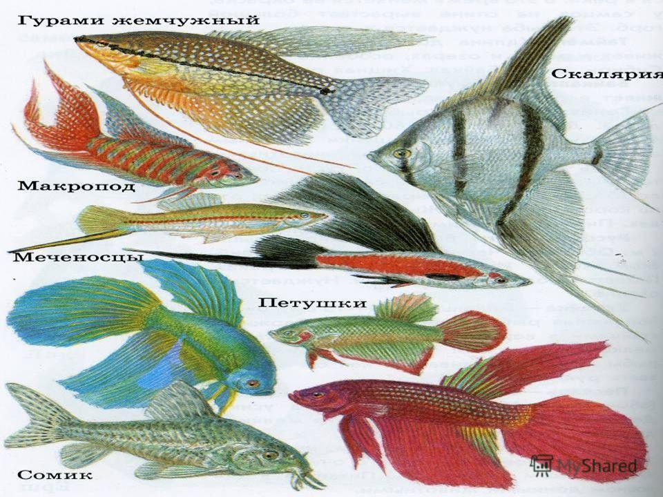 На Земле около 200 тысяч видов разных рыб, но есть такие, которые уничтожаются человеком. Их заносят в Красную книгу. Как человек использует рыбу? Но есть место, где рыб не используют в еду, ею любуются. Где это?