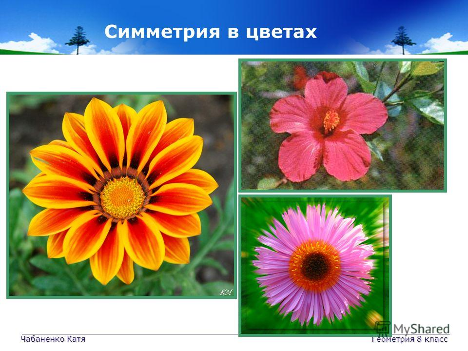Чабаненко Катя Геометрия 8 класс Симметрия в цветах