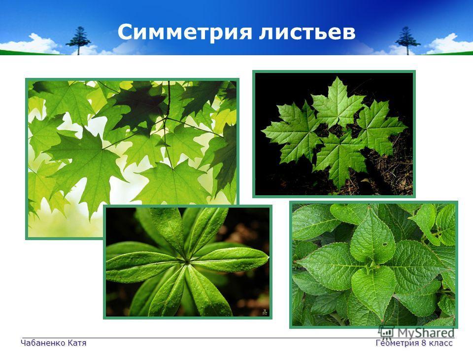 Чабаненко Катя Геометрия 8 класс Симметрия листьев