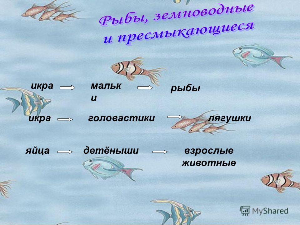 икрамальк и рыбы икраголовастикилягушки яйцадетёнышивзрослые животные