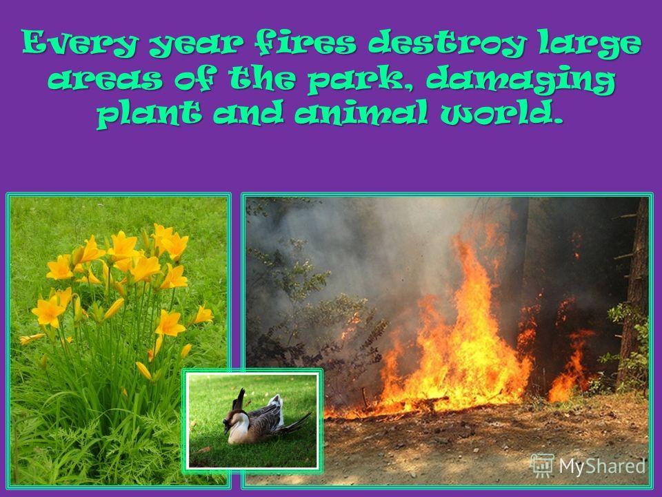 Every year fires destroy large areas of the park, damaging plant and animal world.