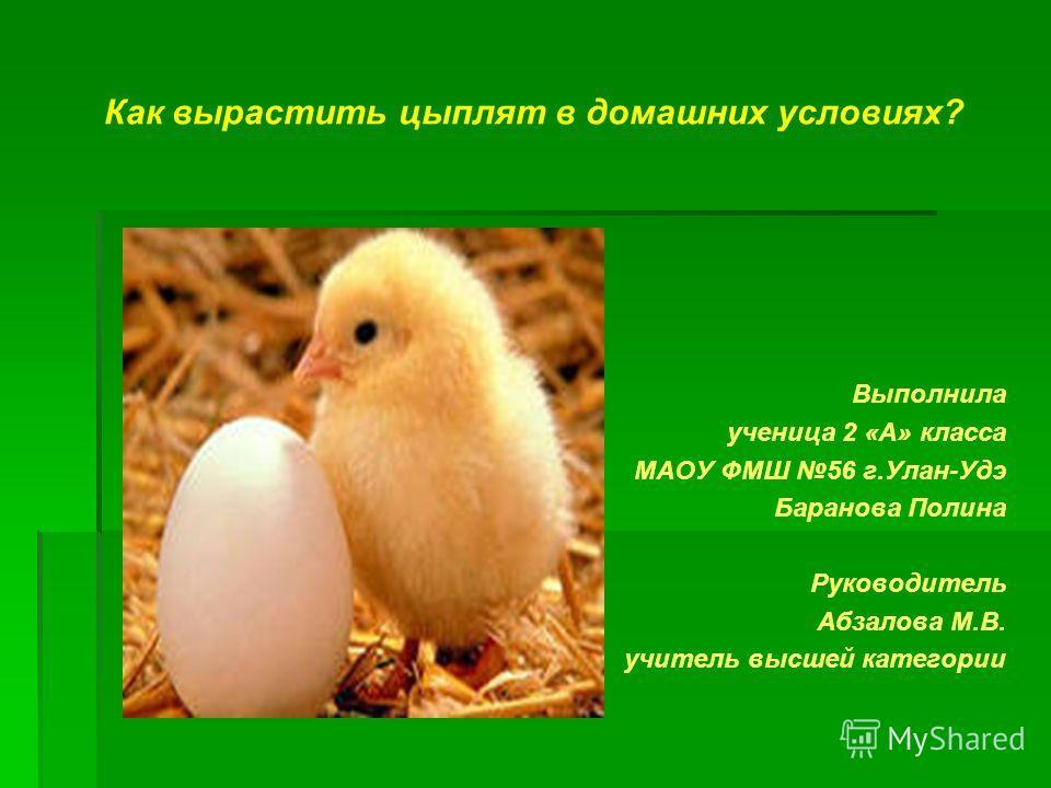 Вывести птенца в домашних условиях