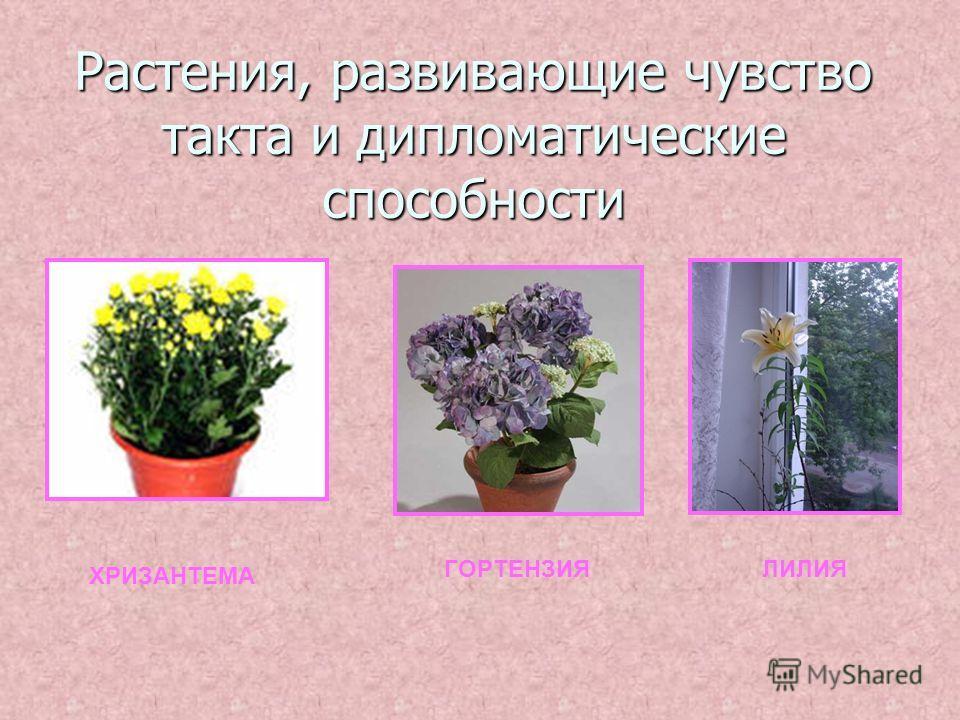 Растения, развивающие чувство такта и дипломатические способности ХРИЗАНТЕМА ГОРТЕНЗИЯЛИЛИЯ