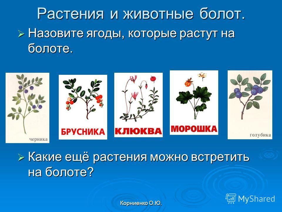 Корниенко О.Ю. Растения и животные болот. Назовите ягоды, которые растут на болоте. Назовите ягоды, которые растут на болоте. Какие ещё растения можно встретить на болоте? Какие ещё растения можно встретить на болоте?