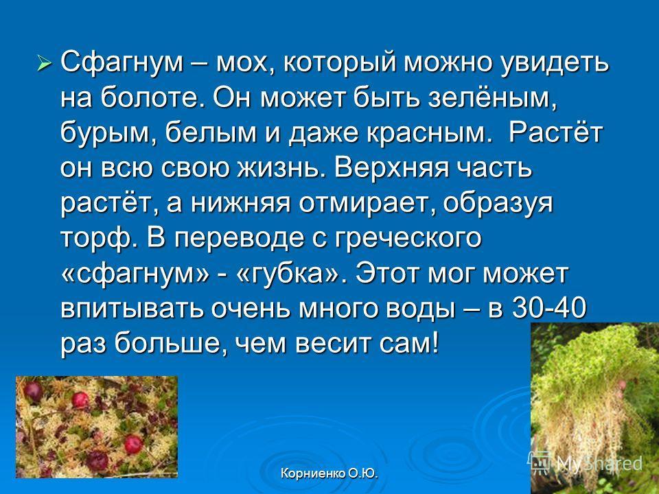 Корниенко О.Ю. Сфагнум – мох, который можно увидеть на болоте. Он может быть зелёным, бурым, белым и даже красным. Растёт он всю свою жизнь. Верхняя часть растёт, а нижняя отмирает, образуя торф. В переводе с греческого «сфагнум» - «губка». Этот мог