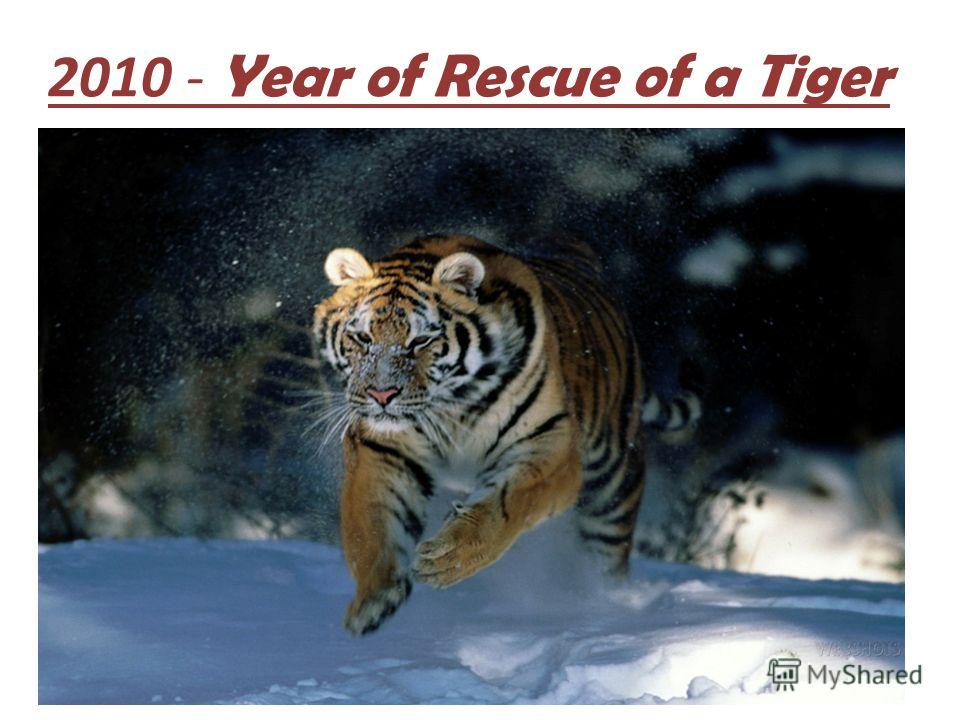 2010 - Year of Rescue of a Tiger