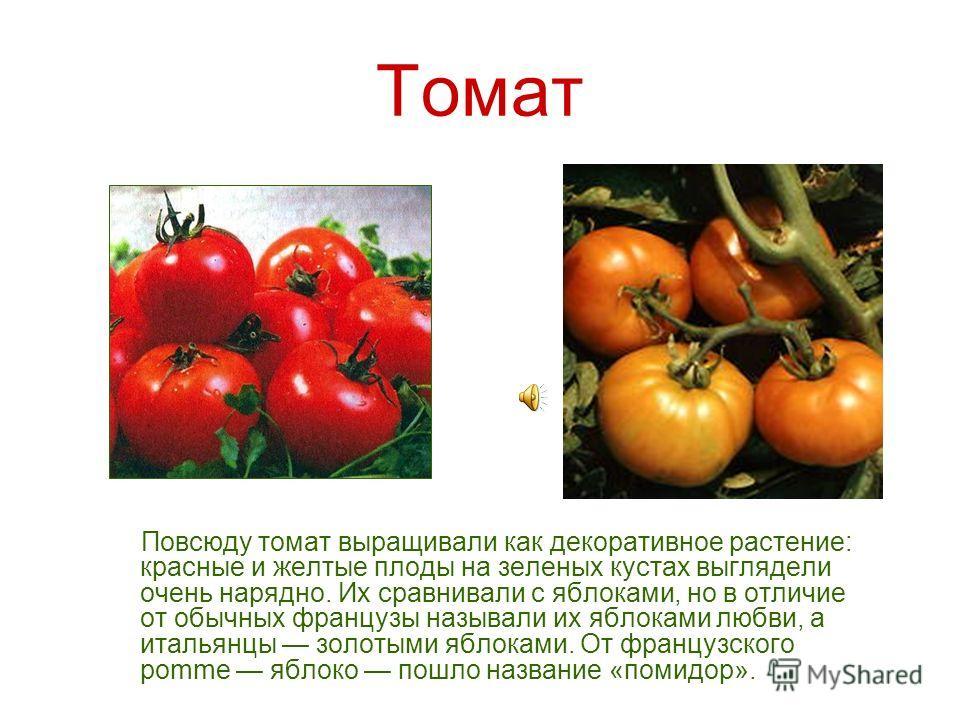 Родина томата Южная Америка, точнее узкая полоса вдоль берега между Эквадором и северной частью Чили, где эту культуру выращивали задолго до появления там европейцев. На языке ацтеков она называлась «томатль» (отсюда русское и европейское название ку