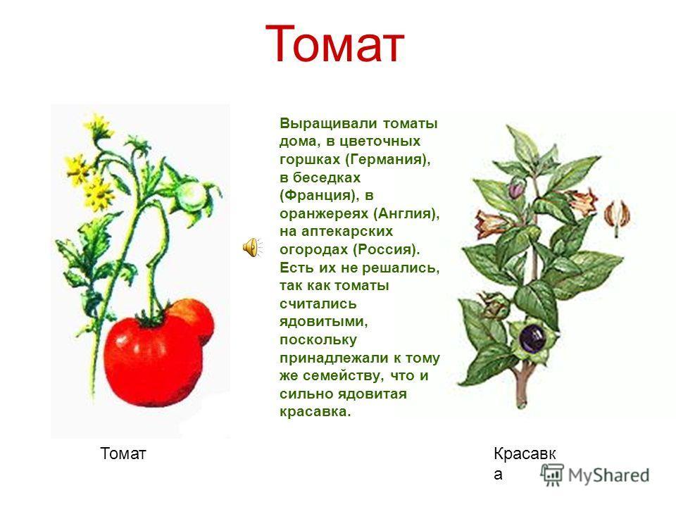 Презентация на тему Доклад на тему Растения путешественники  9 Повсюду