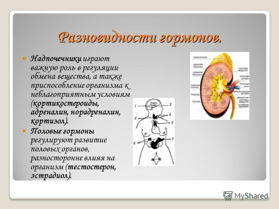 Разновидности гормонов. Надпочечники играют важную роль в регуляции обмена вещества, а также приспособление организма к неблагоприятным условиям (кортикостероиды, адреналин, норадреналин, кортизол). Половые гормоны регулируют развитие половых органов