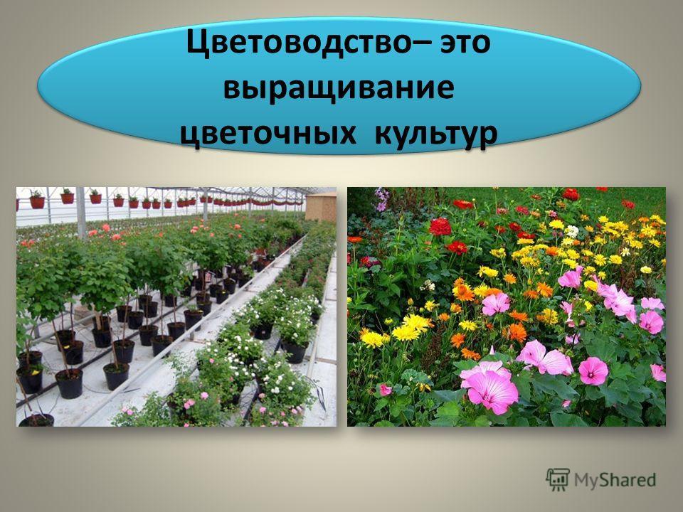 Цветоводство– это выращивание цветочных культур